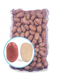 Насіннєва картопля ТОРНАДО